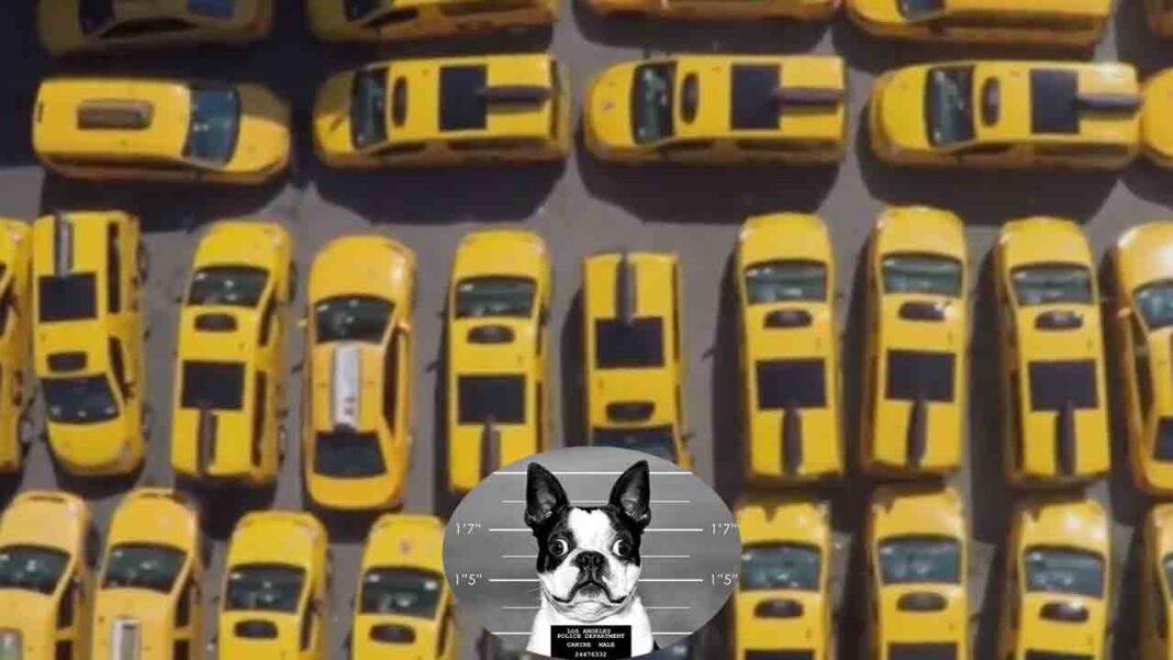 Se acabó: El sector del taxi en Nueva York llega a su punto final