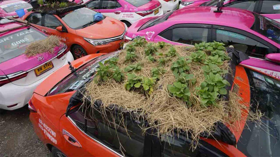Los taxis tailandeses con huertos plantados en sus techos